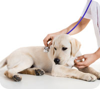 Fem viktiga aspekter i din hundförsäkring
