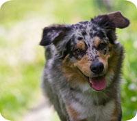 Hundens första år kostar nästan 20 000 kronor